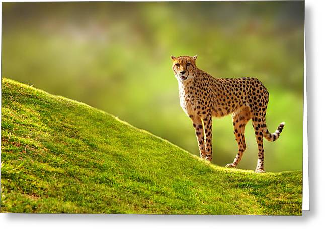 Large Mammals Greeting Cards - Cheetah on a Hill Greeting Card by Susan  Schmitz