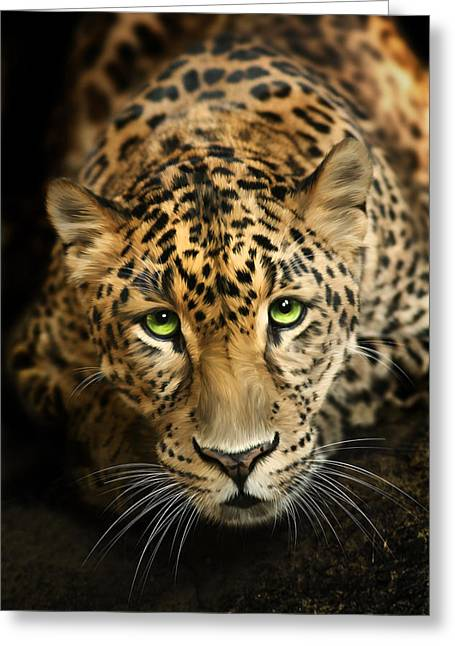 """wild Cat"" Greeting Cards - Cheetaro Greeting Card by Big Cat Rescue"