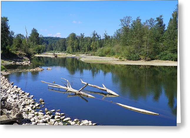 Stream Pyrography Greeting Cards - Chehalis River Washington Greeting Card by Laurie Kidd