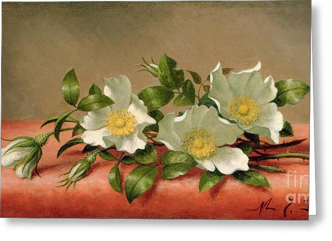 Petal Greeting Cards - Cherokee Roses Greeting Card by Martin Johnson Heade