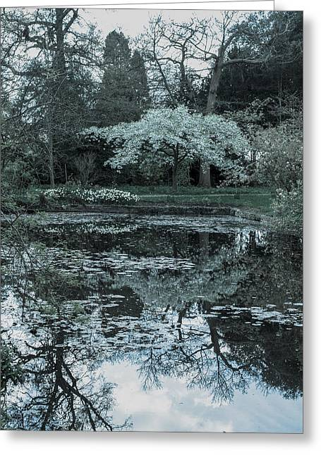 Trees Reflecting In Water Greeting Cards - Cherry blossom and pond Greeting Card by Linda Cooke