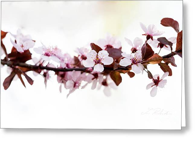 Pink Flower Branch Greeting Cards - Cherry Blossom Branch Greeting Card by Iris Richardson