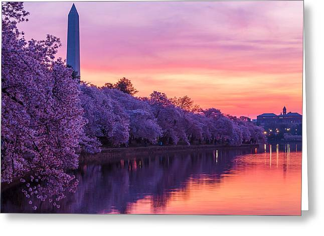 Weeping Greeting Cards - Cherry blossom dawn Greeting Card by Peter Samuel
