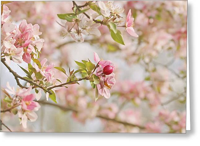 Pink Blossoms Greeting Cards - Cherry Blossom Delight Greeting Card by Kim Hojnacki