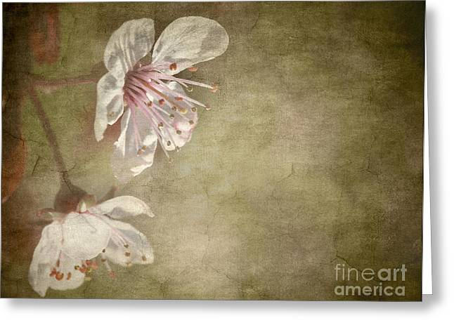 Cherry Blossom Greeting Card by Meirion Matthias