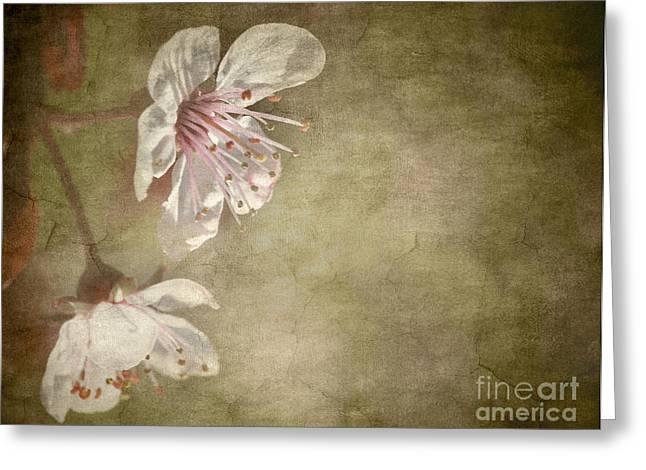 cherry blossom Greeting Card by Meirion Matthias