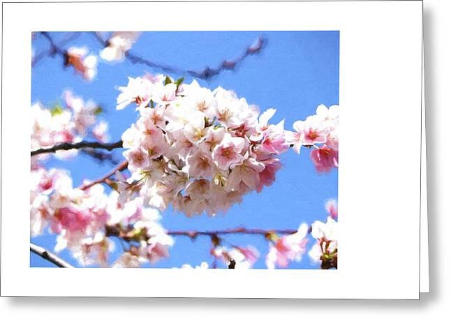 Floral Digital Art Greeting Cards - Cherry Blossom Trees of Branch Brook Park 16 Greeting Card by Allen Beatty