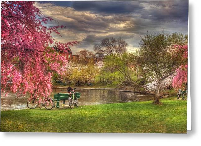 Cherry Blossom Trees On The Charles River Basin In Boston Greeting Card by Joann Vitali