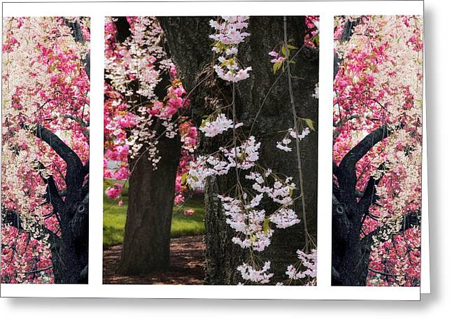 Weeping Greeting Cards - Cherry Blossom Triptych Greeting Card by Jessica Jenney