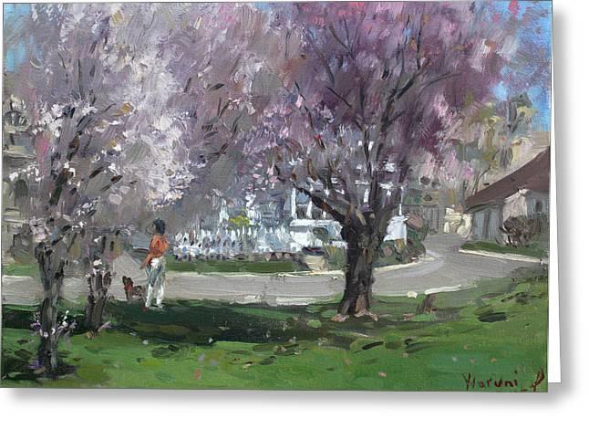 Cherry Blossom Greeting Card by Ylli Haruni