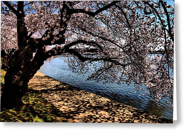 Cherry Blossoms - Washington Dc Greeting Card by Wayne Higgs