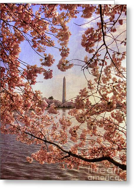 Cherry Blossoms And The Washington Monument Greeting Card by Lois Bryan