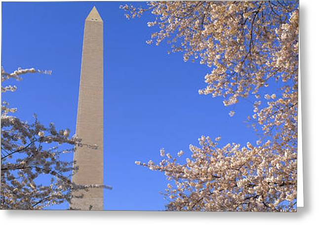 Seat Of Power Greeting Cards - Cherry Blossoms And Washington Greeting Card by Panoramic Images
