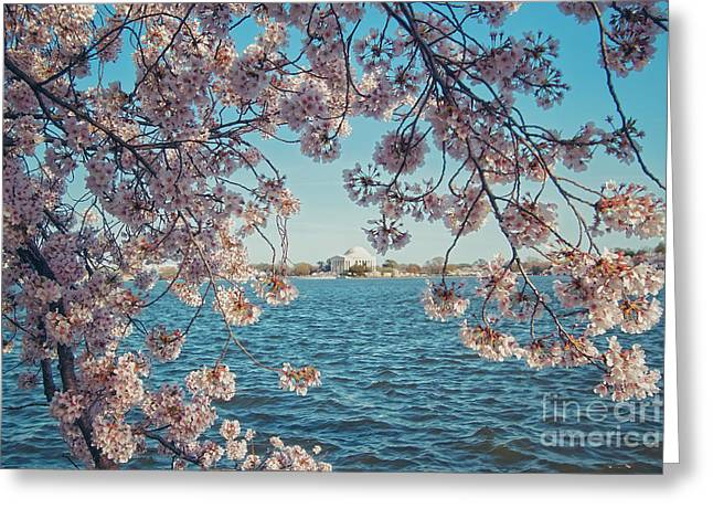 Cherry Blossom Festival Greeting Cards - Cherry Blossoms in DC Greeting Card by Emily Enz