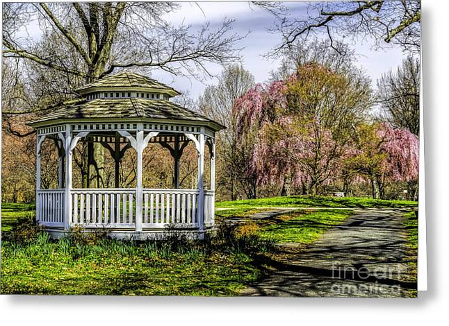 Fairmount Park Greeting Cards - Cherry Blossoms in the park Greeting Card by Nick Zelinsky