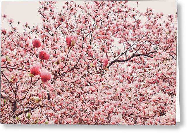 New York Photo Greeting Cards - Cherry Blossoms Greeting Card by Vivienne Gucwa