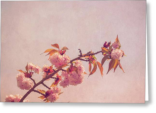 Cherry Art Greeting Cards - Cherry Blossoms Greeting Card by Wim Lanclus