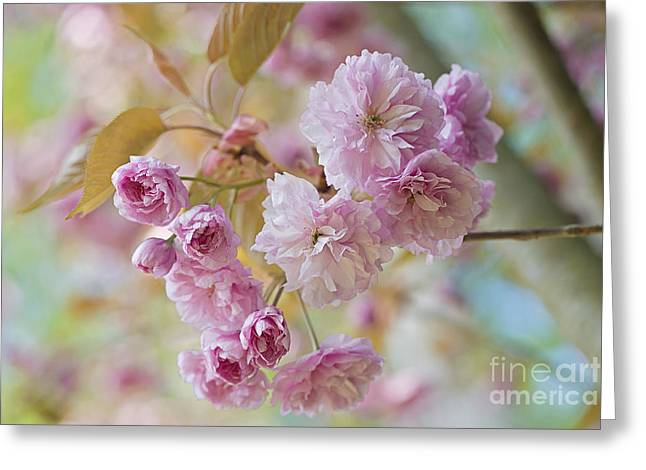 Recently Sold -  - Close Focus Floral Greeting Cards - Cherry Delight Greeting Card by Jacky Parker