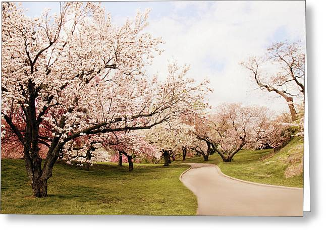 Country Lanes Digital Art Greeting Cards - Cherry Lane Greeting Card by Jessica Jenney