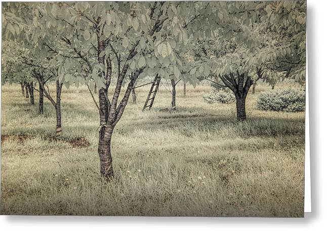 Monotone Color Greeting Cards - Cherry Orchard in Infrared Greeting Card by Randall Nyhof
