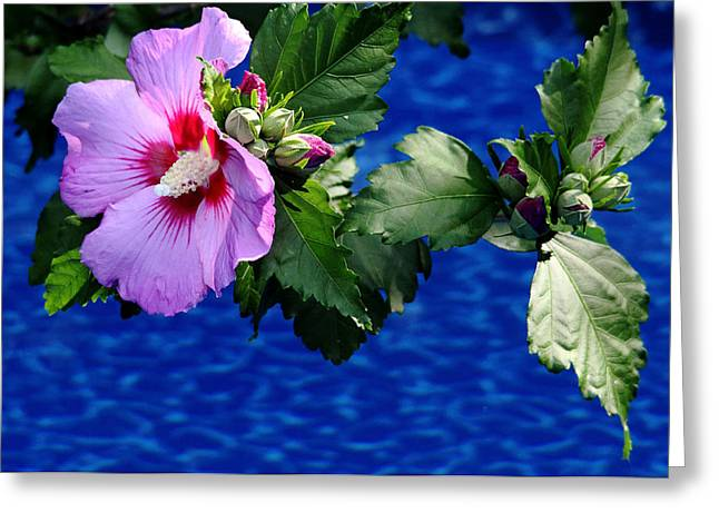 Cherry Throat Greeting Card by Debbie Oppermann