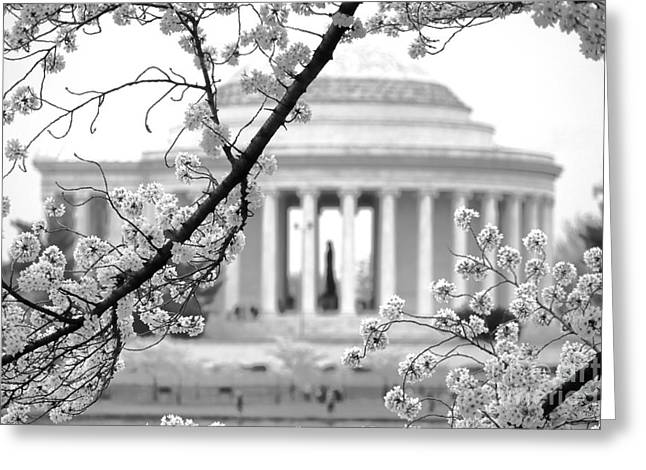 Cherry Tree And Jefferson Memorial Elegance  Greeting Card by Olivier Le Queinec