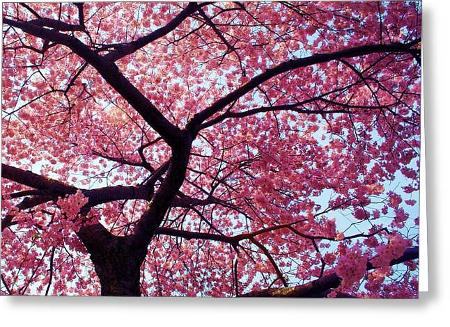 Cherry Tree Greeting Card by Mitch Cat