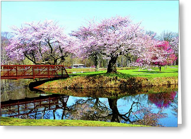 Flowering Trees Greeting Cards - Cherry Trees in the Park Greeting Card by Susan Savad