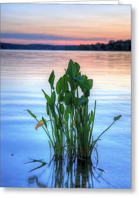 Delmarva Greeting Cards - Chesapeake Bay Greeting Card by JC Findley