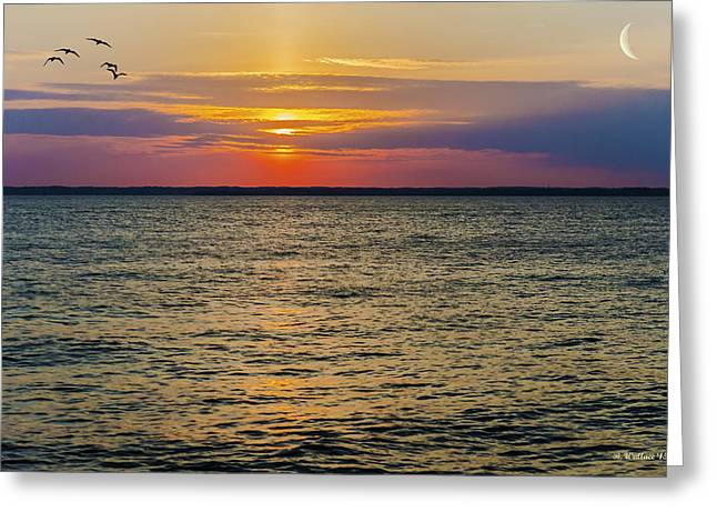 Flying Seagull Greeting Cards - Chesapeake Dreams Greeting Card by Brian Wallace