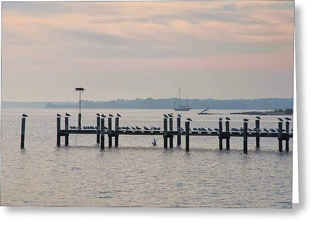 Sailboats Docked Digital Art Greeting Cards - Chesapeake Seagulls Greeting Card by Bill Cannon