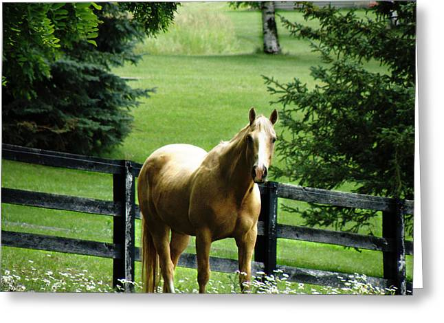 Chestnut Horse Greeting Cards - Chestnut Greeting Card by Scott Hovind