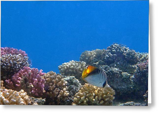 Decorative Fish Greeting Cards - Chevron Butterflyfish Greeting Card by Johanna Hurmerinta