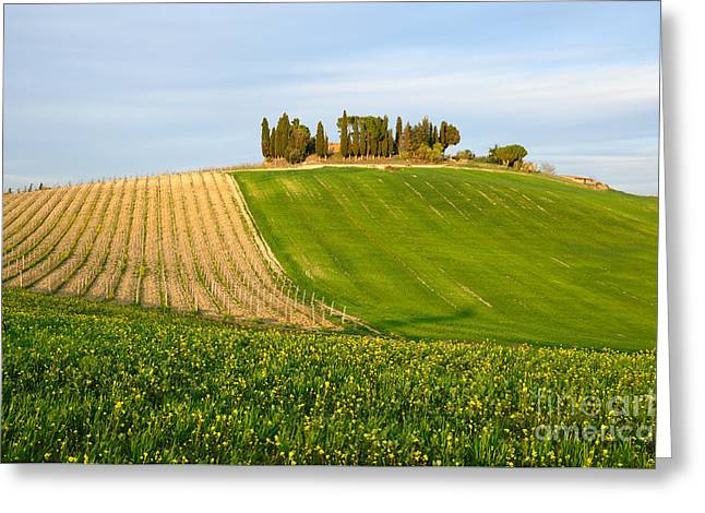 Tuscan Sunset Greeting Cards - Chiantishire Tuscany  Greeting Card by Maurizio Martini