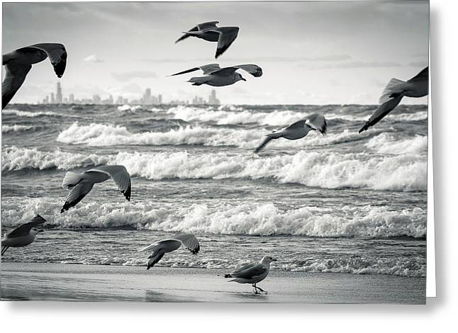 Flying Seagull Greeting Cards - Chicago Framed in Flight Greeting Card by Jackie Novak