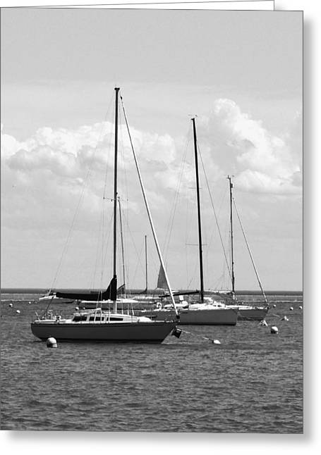Docked Sailboats Greeting Cards - Chicago Harbour - Detail B n W Greeting Card by Richard Andrews