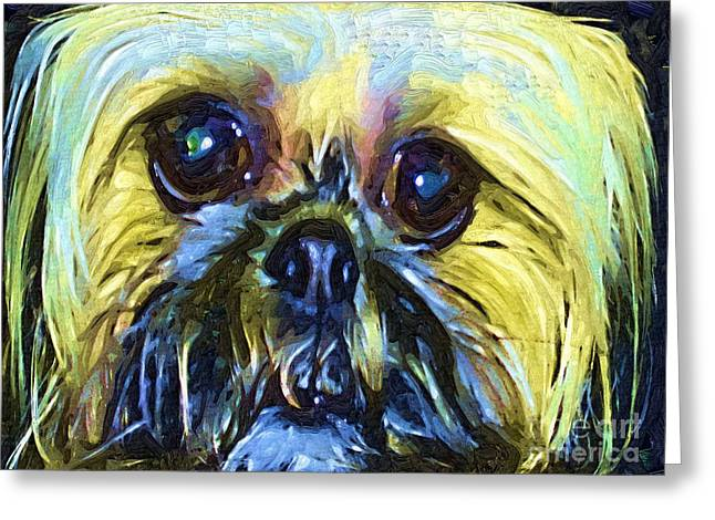 Shihtzu Greeting Cards - ChiChi Greeting Card by Deborah MacQuarrie