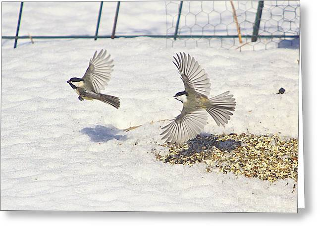 Feeder Framed Prints Greeting Cards - Chickadee-6 Greeting Card by Robert Pearson