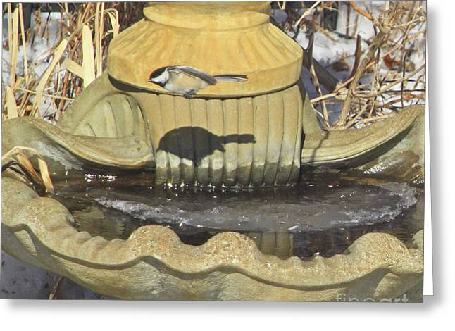Feeder Framed Prints Greeting Cards - Chickadee-7 Greeting Card by Robert Pearson