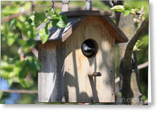 Little Birds Greeting Cards - Chickadee in Birdhouse Greeting Card by Marjorie Imbeau