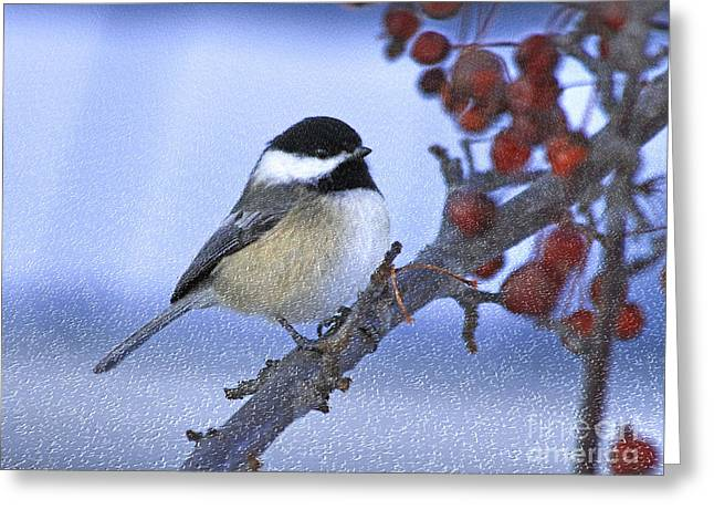 Chickadee With Craquelure Greeting Card by Deborah Benoit