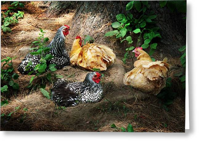 Layers Greeting Cards - Chicken Dust Bath party Greeting Card by Joy Nichols