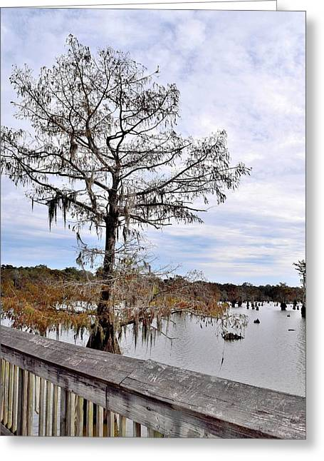 Chicot State Park Greeting Card by Lisa Ancona Miller