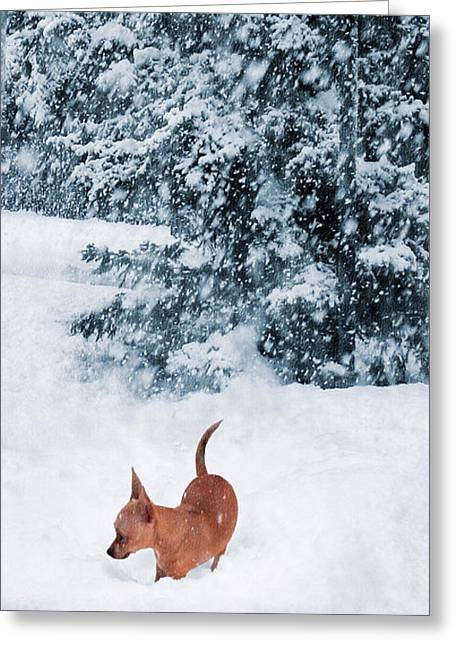 Chihuahua In The Snow - Puppy Winterscape Greeting Card by Rayanda Arts