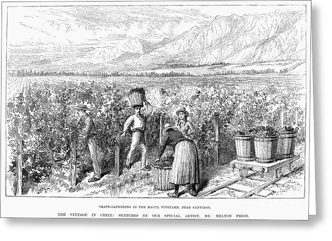 Wine Woman Greeting Cards - Chile: Wine Harvest, 1889 Greeting Card by Granger