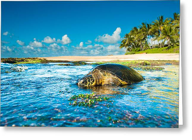 Laniakea Beach Greeting Cards - Chilling Honu Greeting Card by Leonardo Dale