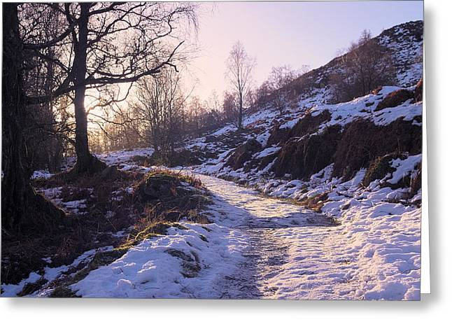 Light And Dark Greeting Cards - Chilly Weather Greeting Card by Tim Haynes