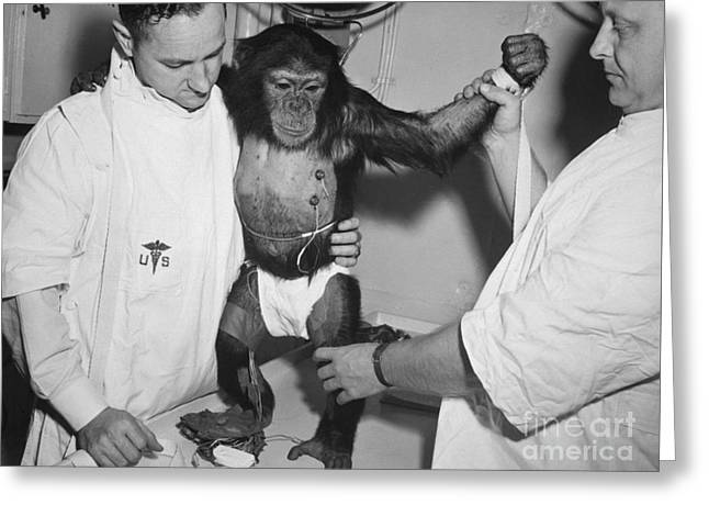 4th July Digital Art Greeting Cards - Chimpanzee Ham with bio sensors attached readied by handlers for his trip in the Mecury Redstone 2 Greeting Card by R Muirhead Art