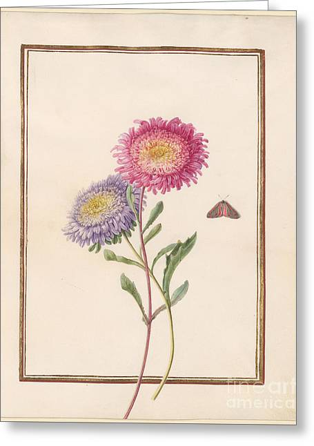 China Aster Greeting Card by MotionAge Designs