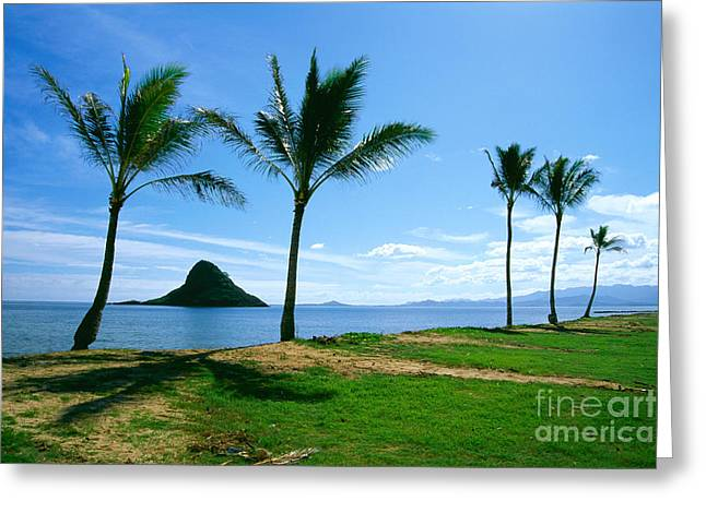 Green Hat Art Greeting Cards - Chinamans Hat Greeting Card by Bill Brennan - Printscapes